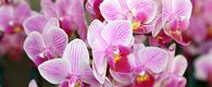 Offerta Settimana Orchidea a Maggio